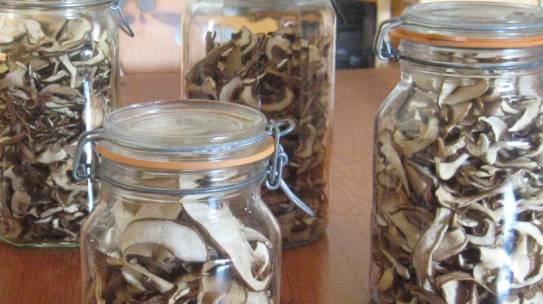 Mushrooms Like Paper-Thin Memories