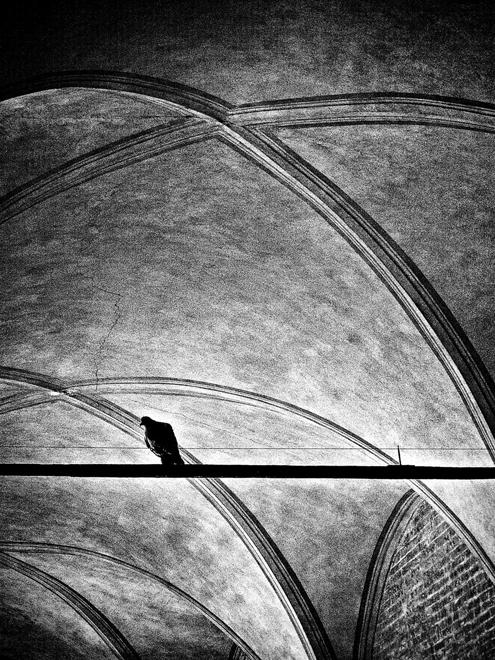 Il piccione sta pensando