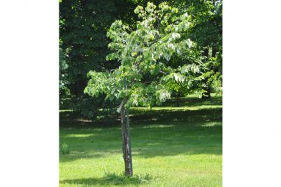 Tree-DSC_0079.jpg